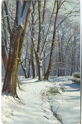 C269 Winter Woodland